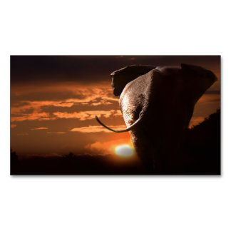 Sunset with Elephant Magnetic Business Card