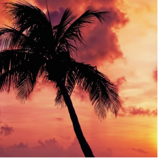 Sunset with Palm Photo Cut Outs