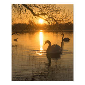 Sunset with Swan Flyer
