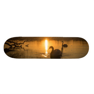 Sunset with Swan Skateboard