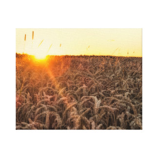 Sunsets field 2 canvas print
