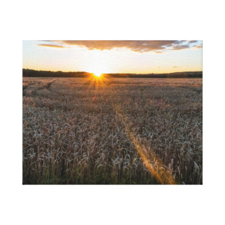Sunsets field canvas print
