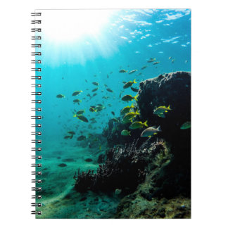Sunshine and Tropical Fish Notebook