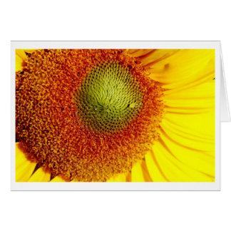 Sunshine center card