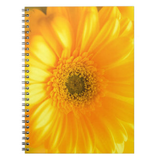 Sunshine Notebook
