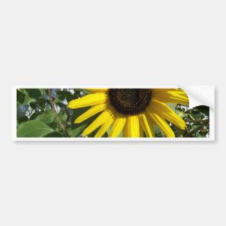 Sunshine Sunflower Bumper Sticker