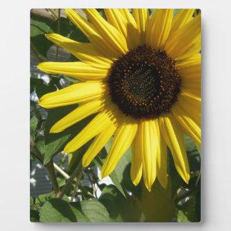 Sunshine Sunflower Plaque