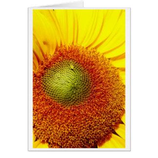 Sunshiney center card