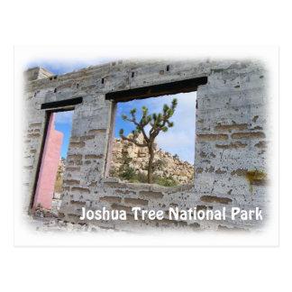 Super Cool Joshua Tree Postcard! Postcard