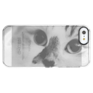 SUPER CUTE Cat Portrait Photograph Clear iPhone SE/5/5s Case