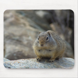 Super Cute Ground Squirrel Mouse Pad