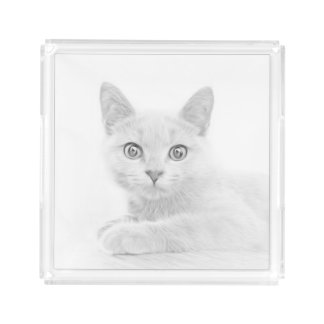 Super Cute Scottish Fold Kitten Cat Serving Tray