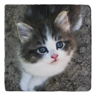 SUPER CUTE Stray Kitten Trivet