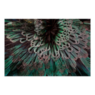 Superb Bird Of Paradise Feather Abstract Poster