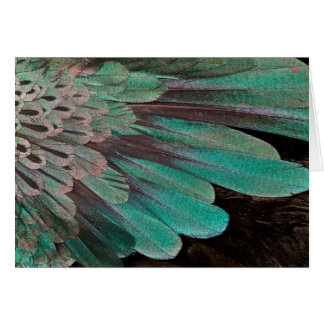 Superb Bird of Paradise feathers Card