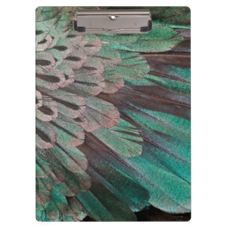 Superb Bird of Paradise feathers Clipboard