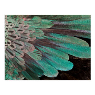 Superb Bird of Paradise feathers Postcard
