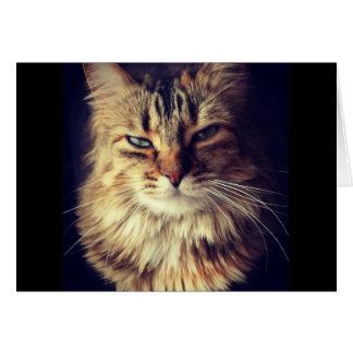 Superior Cat greeting card