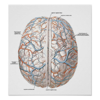 Surface of the Brain Poster
