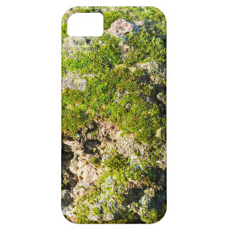 Surface of the old boulders with moss closeup case for the iPhone 5