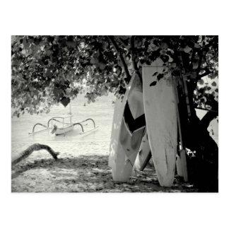 Surfboards Under a Tree Postcard