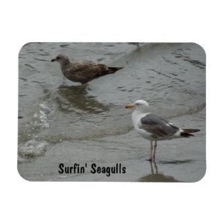 Surf'in Sea Gulls at Port San Luis, California Rectangular Photo Magnet