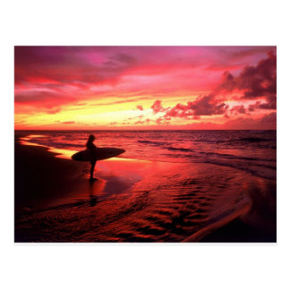 Surfing At Sunset Postcard
