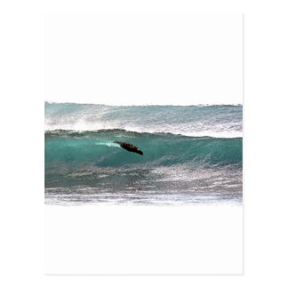 Surfing sea lion ocean waves postcard