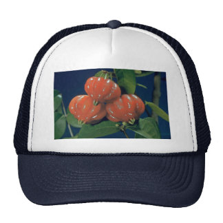 Surinam cherry the edible-fruit Eugenia uniflora Mesh Hats