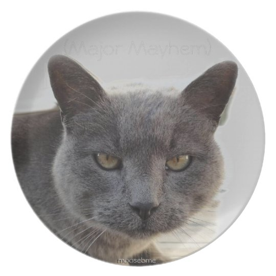 Surly grey cat face plate