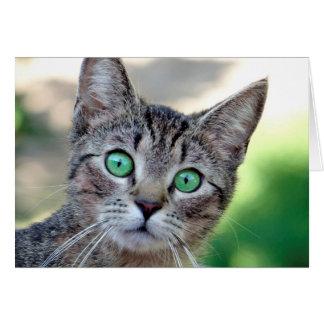 Surprised Cat Card