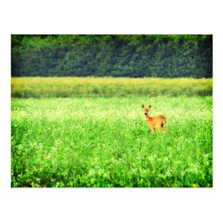 Surprised, deer in the fields Lomo Postcard