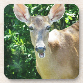 surprised deer.jpg beverage coaster