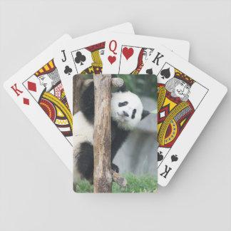 Surprised Panda Cub Playing Cards