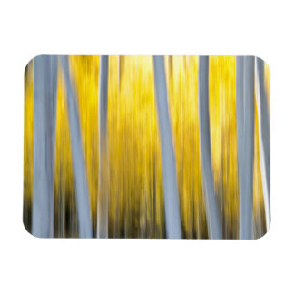 surrounded by Aspen trees Rectangular Photo Magnet