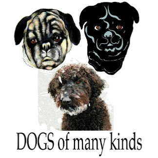 dogs: border collie, labradoodle, poodle, pug