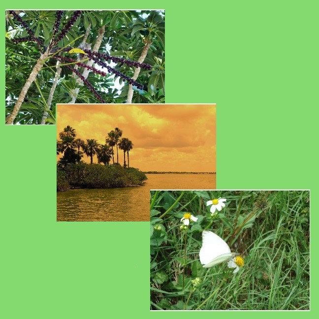 Nature Loving Times