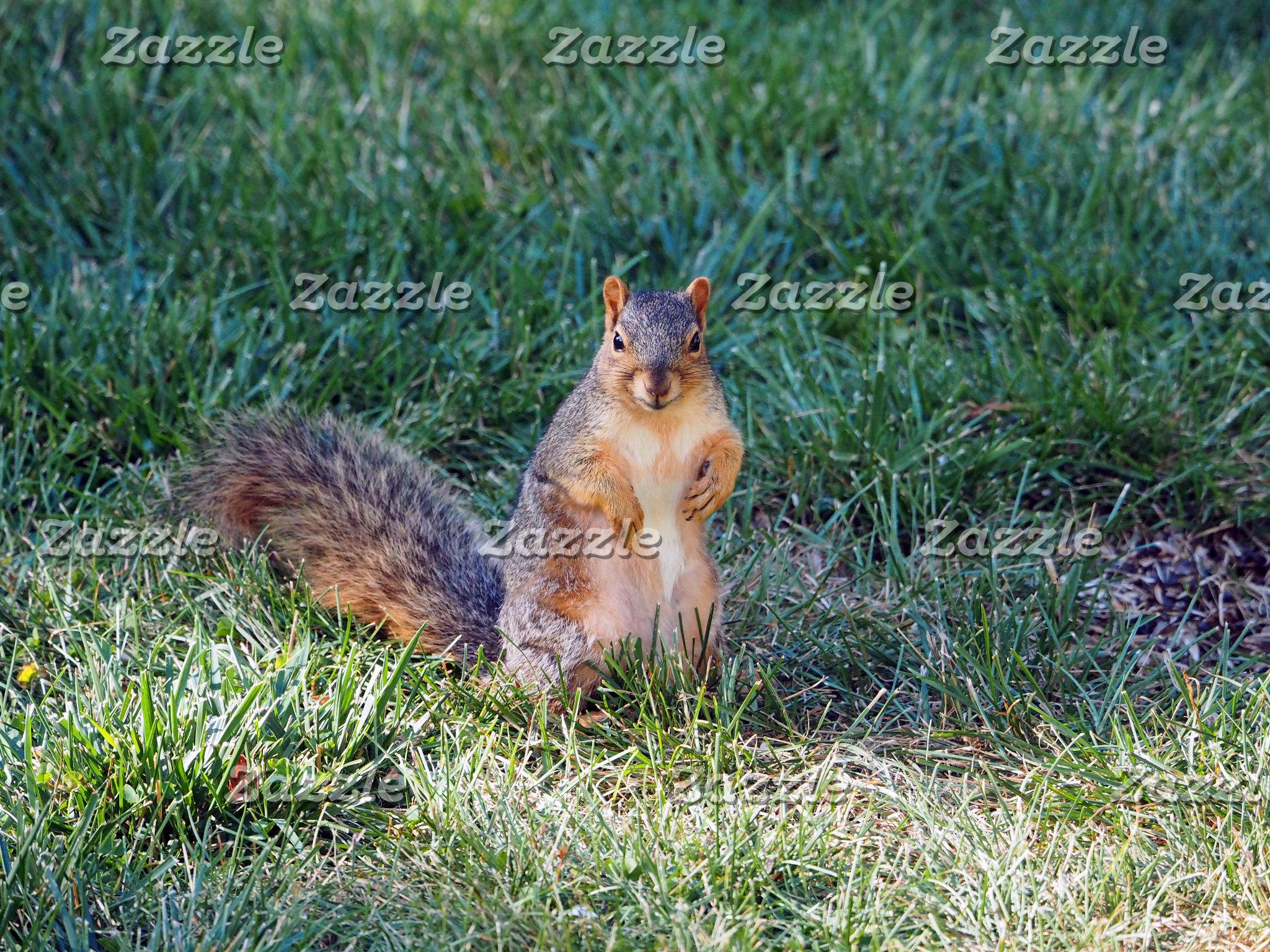 Squirrel 95