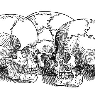 Vintage Skulls