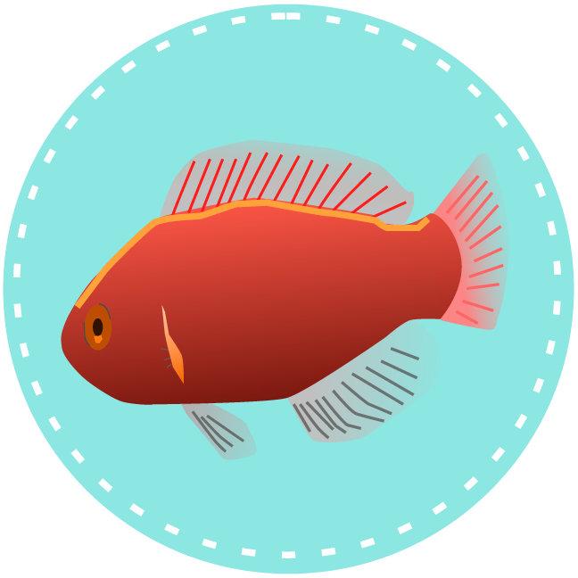Fish Etc