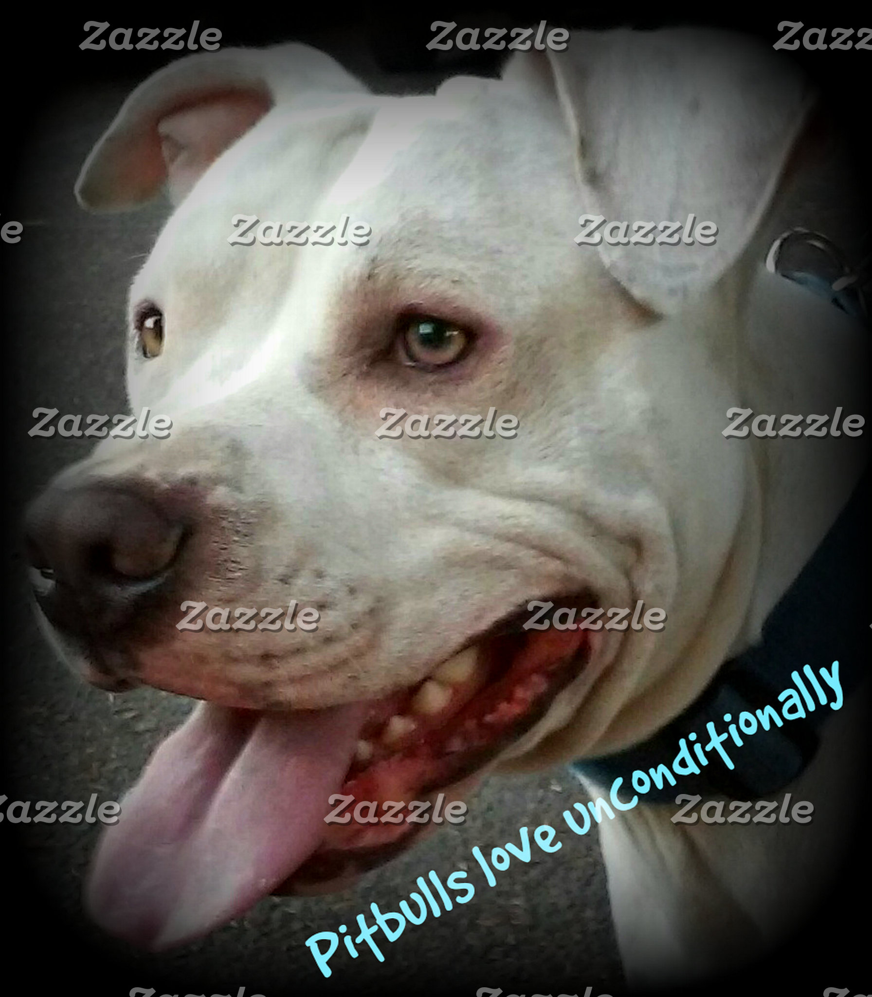 Pit Bull Products