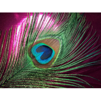 Pink Peacock Feathers