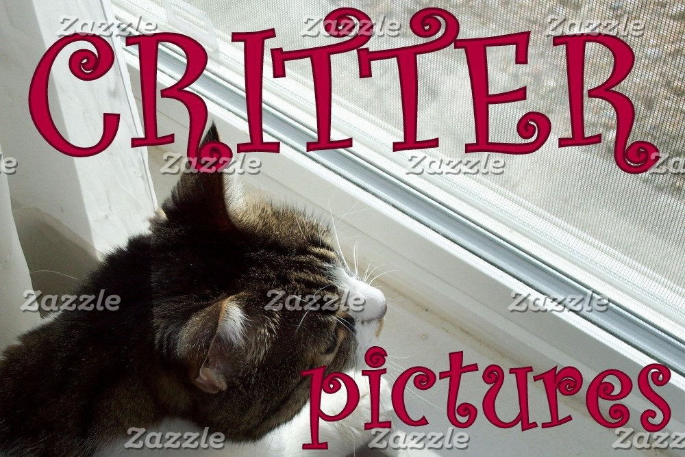 Critter Pictures