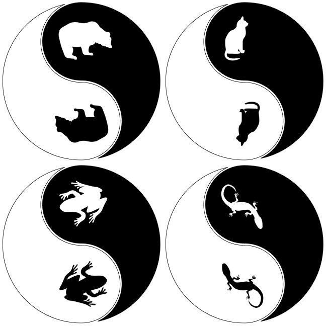 Yin Yang Animals