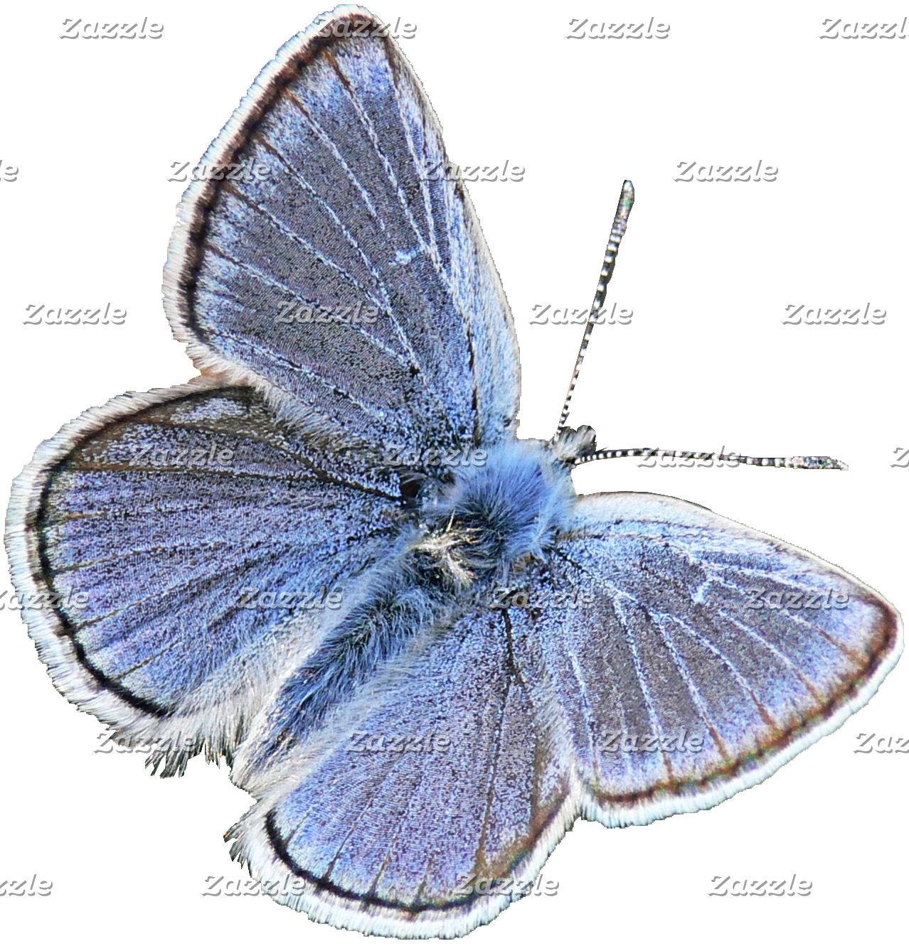 Butterflies ➤