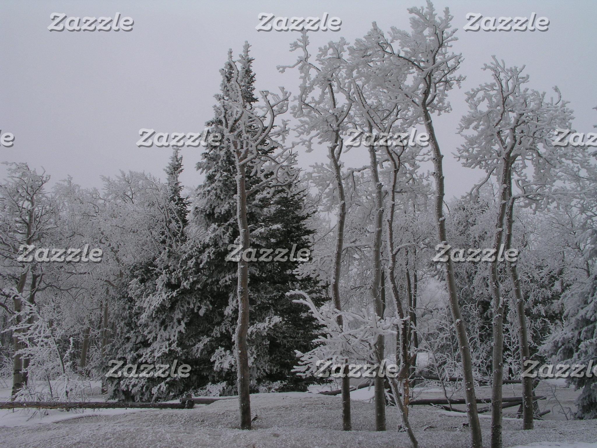 Scenic Winter