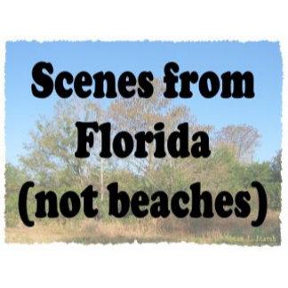 Florida Scenes (not beach)