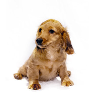 Pet Products - Dogs & Cats