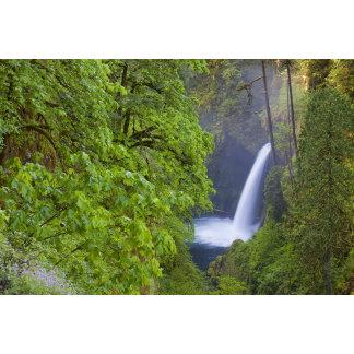 USA, Eagle Creek, Columbia Gorge, Oregon. 2