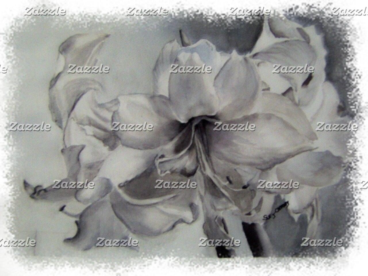 Amaryllis BLACK and WHITE